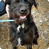 Adopt A Pet :: Cabarrus - Spartanburg, SC