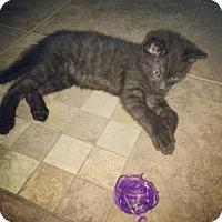 Adopt A Pet :: Jinx - Portland, IN