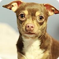 Adopt A Pet :: Emma - Romeoville, IL