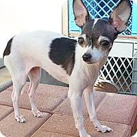 Adopt A Pet :: ULTRA - AUSTIN, TX