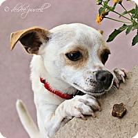 Adopt A Pet :: Carlos - Gilbert, AZ