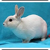 Adopt A Pet :: Darnell - Williston, FL