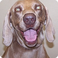Adopt A Pet :: Bailee - St. Louis, MO