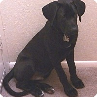 Adopt A Pet :: Titan-Courtesy Post - North Olmsted, OH