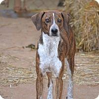 Adopt A Pet :: Katie - Homewood, AL