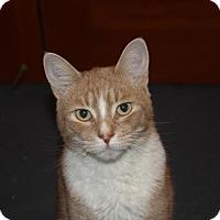 Adopt A Pet :: Thor (LE) - Little Falls, NJ