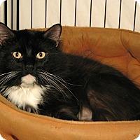 Adopt A Pet :: Bellamy - Milford, MA