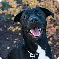 Adopt A Pet :: River - Bristol, CT