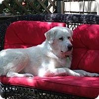 Adopt A Pet :: Buddy in VT - Ascutney, VT