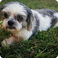 Adopt A Pet :: Nettie - Newark, DE