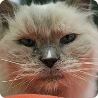 Adopt A Pet :: Daniel - Chicago, IL