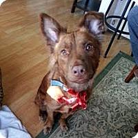 Adopt A Pet :: Diesel - Mira Loma, CA