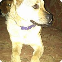 Adopt A Pet :: Valentina - Shelter Island, NY