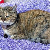 Adopt A Pet :: Iris - Fremont, OH