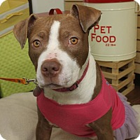 Adopt A Pet :: Ruby Sue-Adopted! - Detroit, MI
