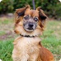 Adopt A Pet :: Redfeld - San Diego, CA