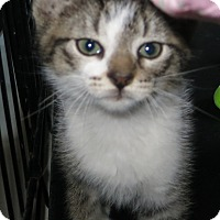 Adopt A Pet :: Wheels - Geneseo, IL