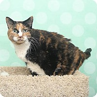 Adopt A Pet :: Vidia - Chippewa Falls, WI