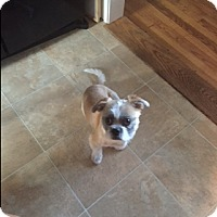 Adopt A Pet :: Toby (courtesy listing) - Bartonsville, PA
