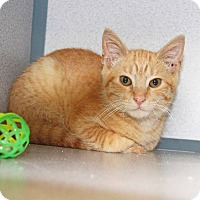 Adopt A Pet :: Gingerale - New Rochelle Humane, NY