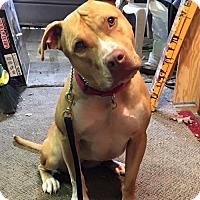 Adopt A Pet :: CAMILLA (FOSTER NEEDED) - Belleville, MI