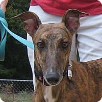 Adopt A Pet :: Sunny - Oak Ridge, NC