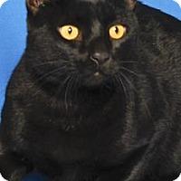 Adopt A Pet :: BRUTUS - Gloucester, VA