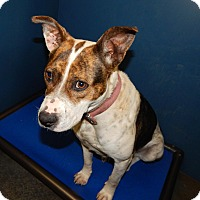 Adopt A Pet :: Jenny - Henderson, NC