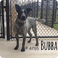 Adopt A Pet :: Bubba - Alvin, TX