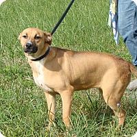Adopt A Pet :: Bonnie - Cameron, MO