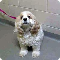 Adopt A Pet :: Sophie 13-112-2 - Parker, CO