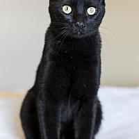 Adopt A Pet :: Fritz - Baton Rouge, LA