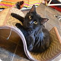 Adopt A Pet :: Star - Ridgway, CO