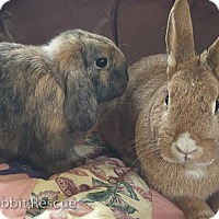 Adopt A Pet :: Delphina & Tucker - Livermore, CA