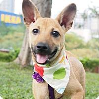 Adopt A Pet :: Tracy - Castro Valley, CA
