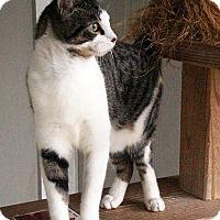 Adopt A Pet :: Briley - Maynardville, TN