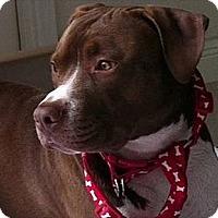 Adopt A Pet :: Baby J - Naples, FL