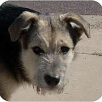 Adopt A Pet :: Bear - Only $85 adoption fee! - Litchfield Park, AZ