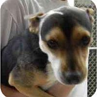 Adopt A Pet :: Jeffrey - Alexandria, VA