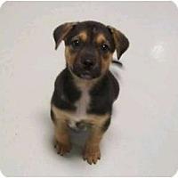 Adopt A Pet :: Ryder - Brewster, NY