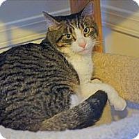 Adopt A Pet :: Freddie - Victor, NY