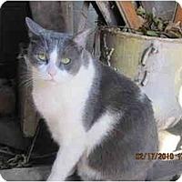 Adopt A Pet :: Leo - Los Angeles, CA