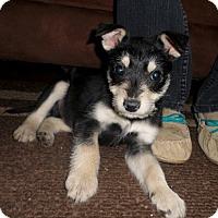 Adopt A Pet :: Penny - Huntsville, AL