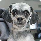 Adopt A Pet :: Missy-PENDING