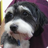 Adopt A Pet :: *URGENT* Dolce & Gabbana - Van Nuys, CA
