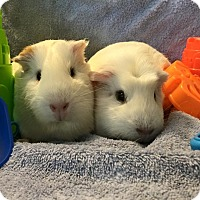 Adopt A Pet :: Eliza & Dove - Fullerton, CA