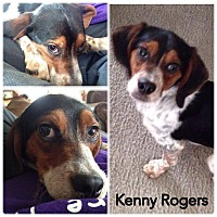 Adopt A Pet :: ADOPTION PENDING-Kenny Rogers - Indianapolis, IN