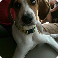 Adopt A Pet :: Chance - Charlestown, RI