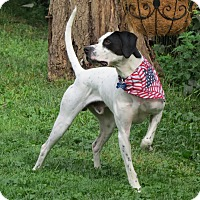 Adopt A Pet :: Captain America- ILLINOIS - Wood Dale, IL