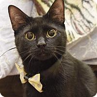 Adopt A Pet :: Blynken - Homewood, AL